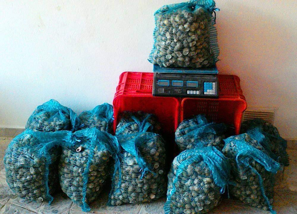 lumache sacchi