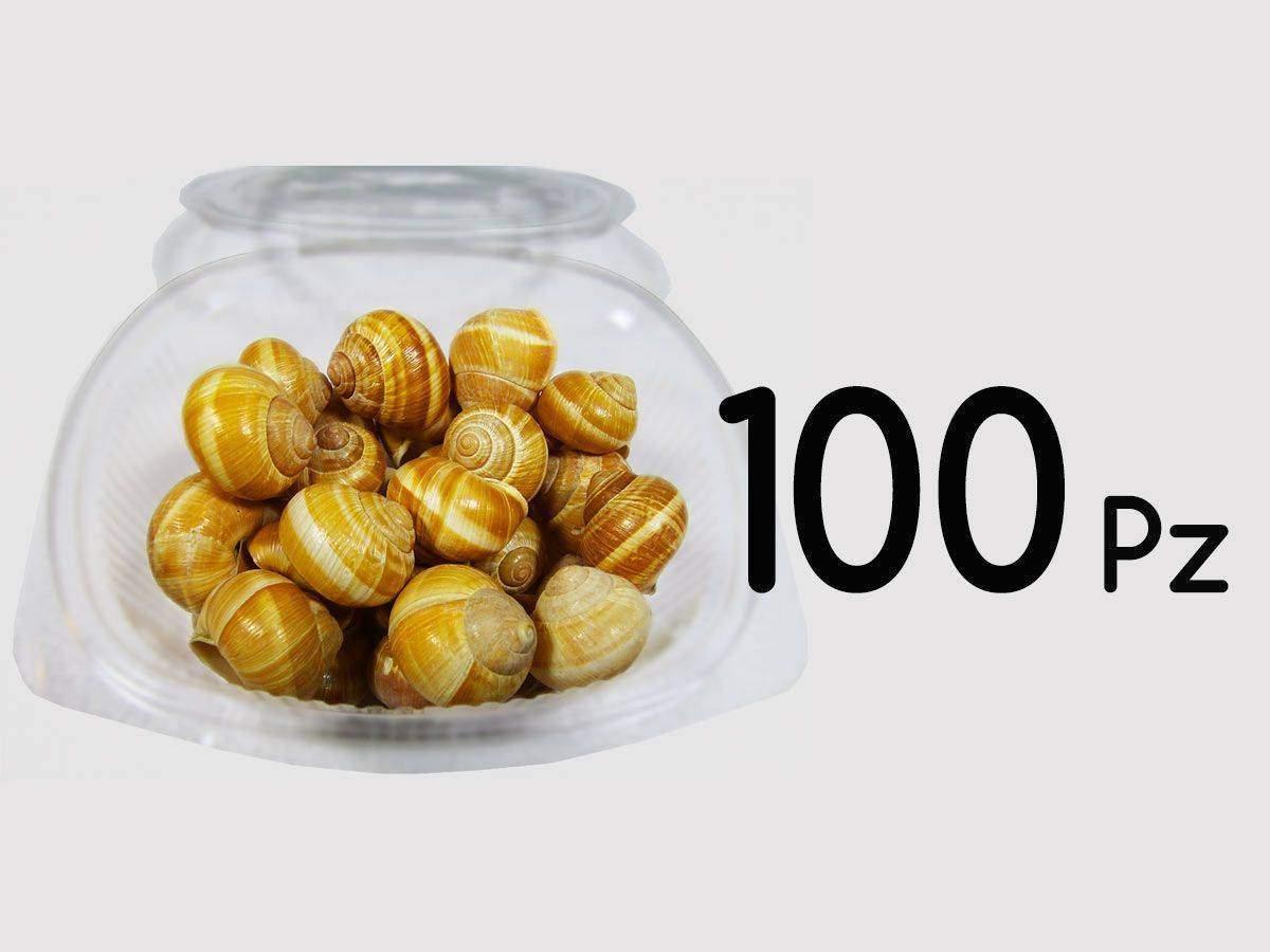vendita lumache chiocciole 100 pz
