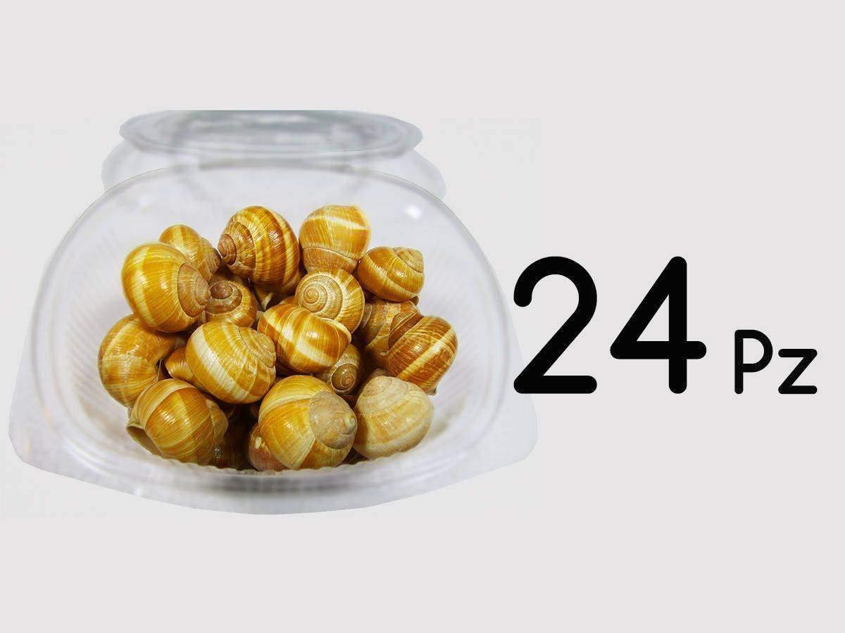 vendita lumache chiocciole 24 pz