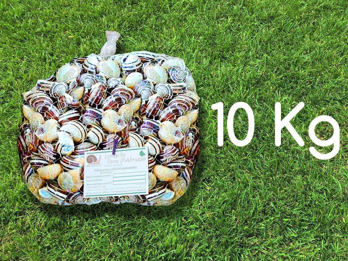vendita lumache rigatella 10kg