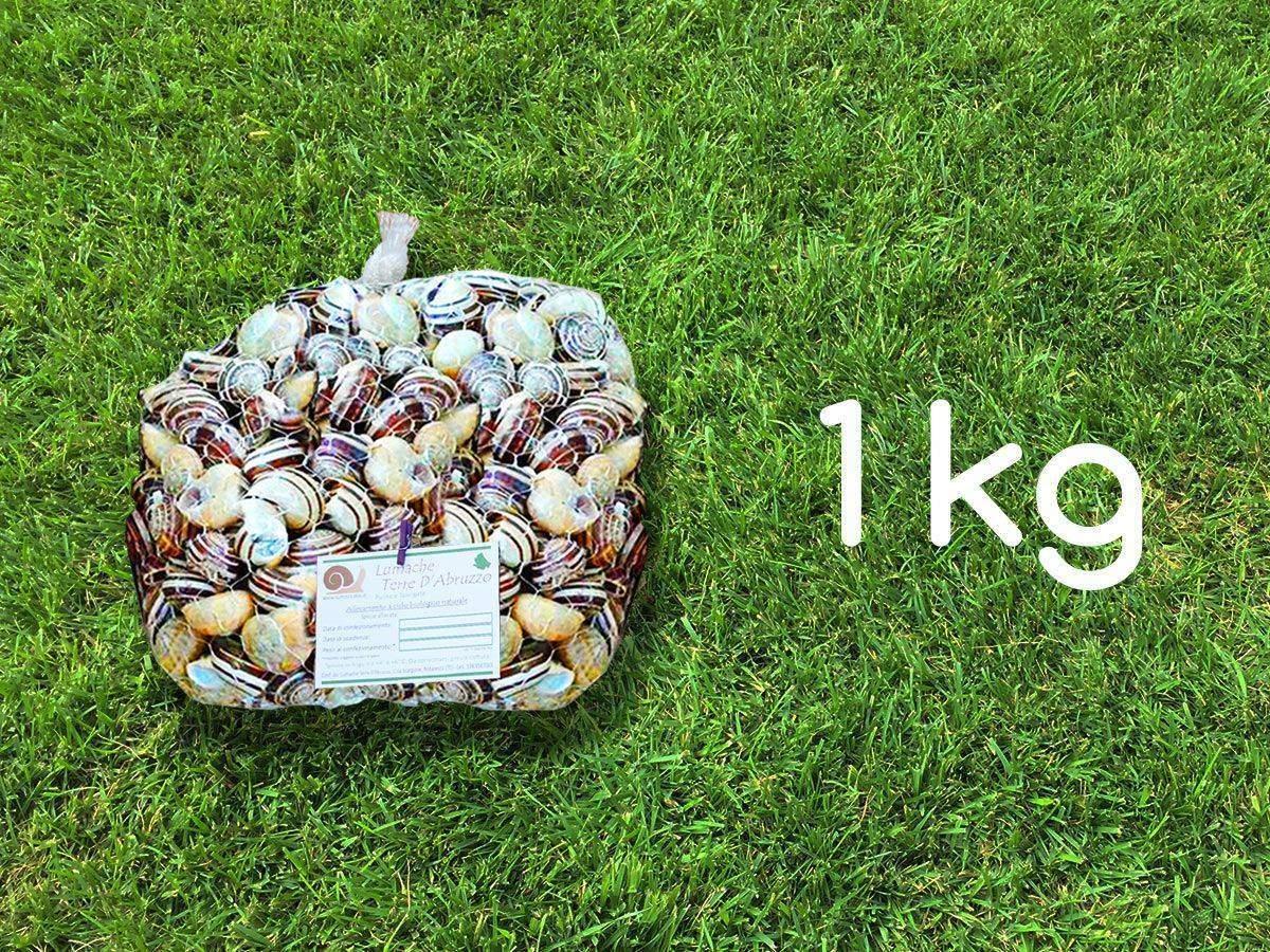 vendita lumache rigatella 1kg