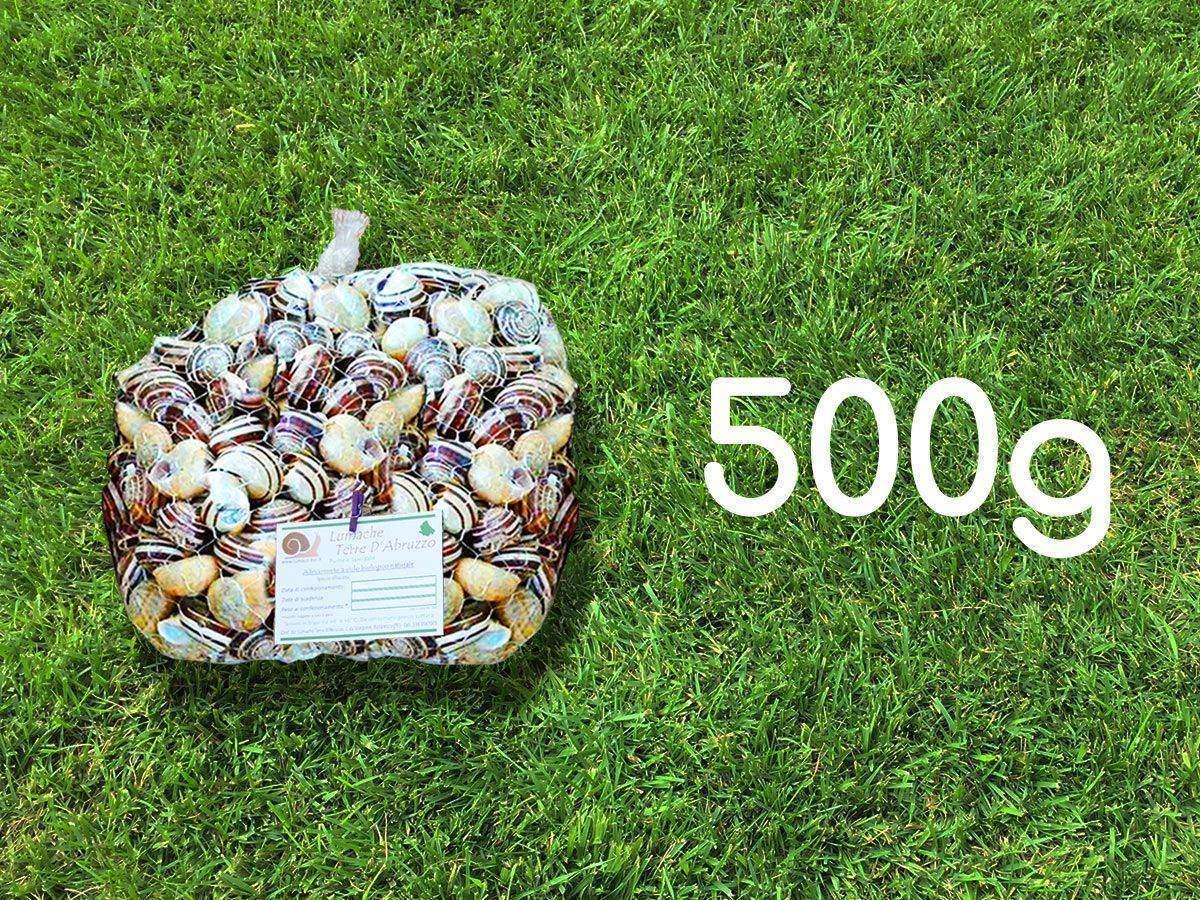vendita lumache rigatella 500